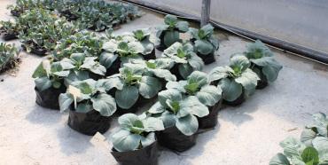 Pflanzenbau Experimente