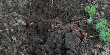 Vermicomposting field-scale experiments